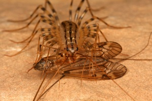 House Centipedes On The Move What S Bugging You